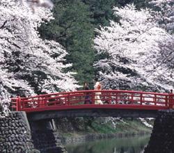 I simboli del Giappone: ciliegi in fiore dietro un ponte rosso, attraversato da una donna in abito tradizionale